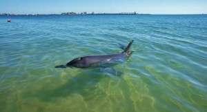 Bunbury Dolphins