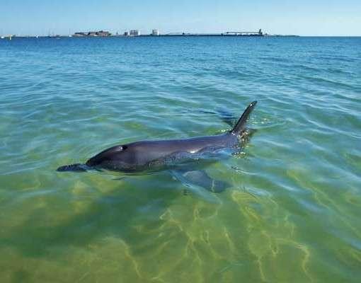 Bunbury Dolphin Tour