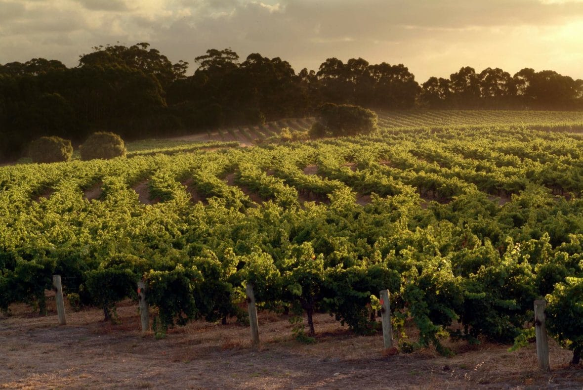 Leeuwin Estate Wine Tour